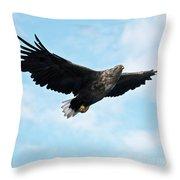 European Flying Sea Eagle 7 Throw Pillow