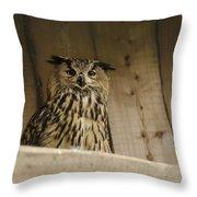 European Owl Throw Pillow
