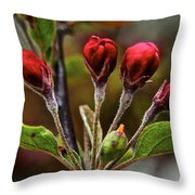 Evening Beauty Throw Pillow