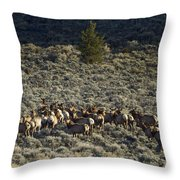 Evening Herd Of Elk   #7640 Throw Pillow