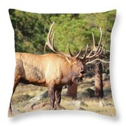 Evening Roundup Throw Pillow