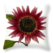 Evening Sun Sunflower 2 Throw Pillow