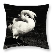 Evening Swan Throw Pillow