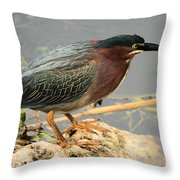 Everglades Green Heron Throw Pillow