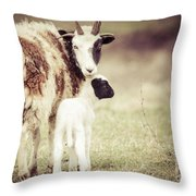 Ewe And Young Throw Pillow