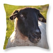 Ewe Bet I'm Cute Throw Pillow