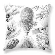 Examples Of Coniferae From Kunstformen Throw Pillow by Ernst Haeckel