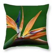Exotic Bird Of Paradise Throw Pillow