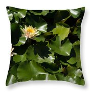 Exotic Colored Waterlilies In The Hot Mediterranean Sun Throw Pillow