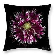 Exotic Dahlia Throw Pillow