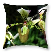Exotic Ladyslipper Throw Pillow