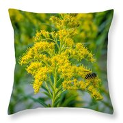 Exploring Goldenrod 3 Throw Pillow