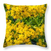 Exploring Goldenrod 6 Throw Pillow