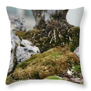 Exposed Roots Throw Pillow
