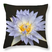 Exquisite Lavender Waterlily Throw Pillow