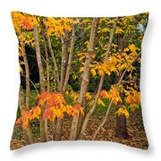Exuberance Throw Pillow
