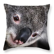 Eye Am Watching You - Koala Throw Pillow