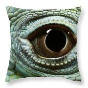 Eye Of A Common Iguana Iguana Iguana Throw Pillow