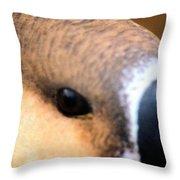 Eye Of The Gander Throw Pillow