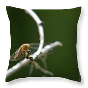 Eye To Eye Throw Pillow