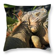 Eyeing The Landscape Throw Pillow