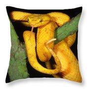 Eyelash Viper Throw Pillow