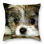 Eyes On You Throw Pillow by Karen Wiles