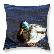 F2110946 Throw Pillow