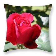 Fabulous Red Rose Throw Pillow