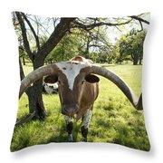 Fabulous Texas Longhorn Throw Pillow