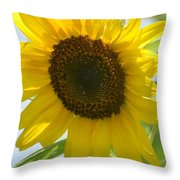Face To Face With A Sunflower Throw Pillow