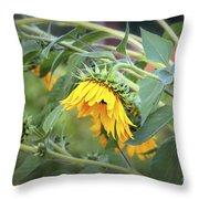 Fading Sunflower Throw Pillow