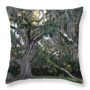 Fairchild Oak With Sunbeam Throw Pillow