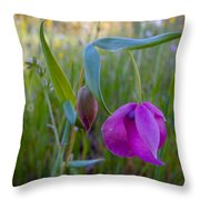 Fairy Lantern In Park Sierra-ca Throw Pillow