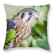 Falcon At Rest Throw Pillow