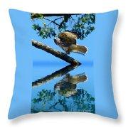 Falcon Reflect Throw Pillow