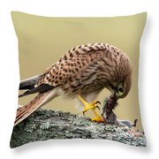 Falcon's Breakfast  Throw Pillow