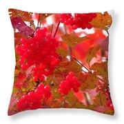 Fall 08-008 Throw Pillow