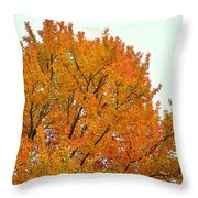 Fall Colors 2014-11 Throw Pillow