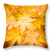 Fall Colors 6664 Throw Pillow