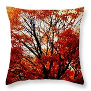 Fall Colors Cape May Nj Throw Pillow