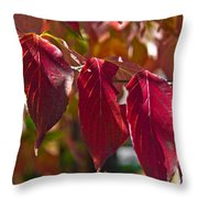 Fall Dogwood Leaves Throw Pillow