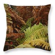 Fall Ferns Acadia National Park Img 6355 Throw Pillow