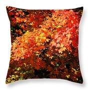 Fall Foliage Colors 21 Throw Pillow