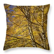 Fall Leaves And Trees In West Michigan No171 Throw Pillow