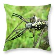 Fall Meadow Spider - Argiope Aurantia Throw Pillow
