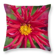 Fall Rains Throw Pillow