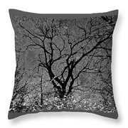 Fall Reflection Throw Pillow