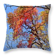 Fall Trees 2 Of Wnc Throw Pillow