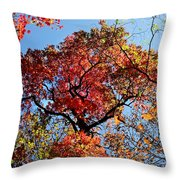 Fall Trees Of Wnc Throw Pillow
